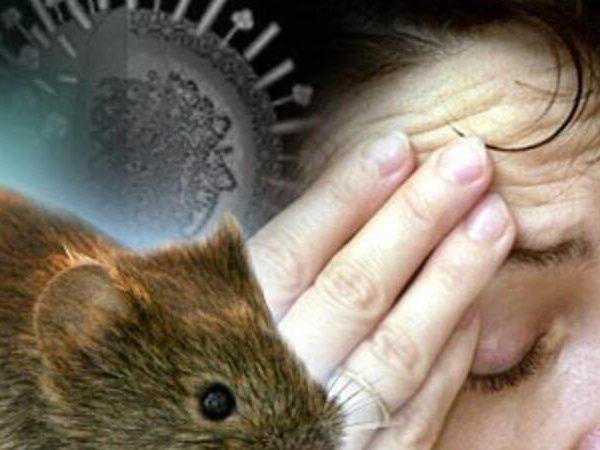Çindən şok xəbər - İndi də yeni virus can almağa başladı