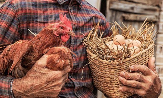 """""""Oba"""" market istehsal tarixini  bir gün sonraya yazıb satışa çıxardığı yumurta ilə bağlı açıqlama verdi"""